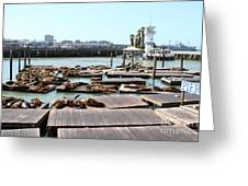 Sea Lions At Pier 39 San Francisco California . 7d14309 Greeting Card by Wingsdomain Art and Photography