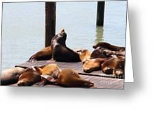 Sea Lions At Pier 39 San Francisco California . 7d14314 Greeting Card