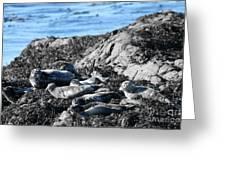 Sea Lions In Alaska Greeting Card