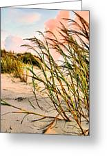 Sea Oats And Dunes Greeting Card by Kristin Elmquist