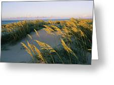 Sea Oats, Dunes, And Beach At Oregon Greeting Card