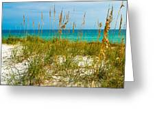 Sea Oats Gulf - Destin Greeting Card