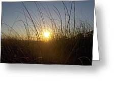 Sea Oats In The Sunset Greeting Card