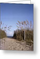 Sea Oats Line The Path Greeting Card