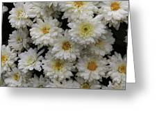 Sea Of White Flowers Greeting Card