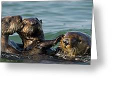 Sea Otter Enhydra Lutris Bachelor Male Greeting Card