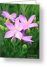 Sea Rose Flower Greeting Card
