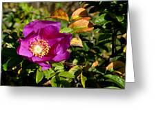 Sea Rose Srp Greeting Card