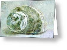 Sea Shell I Greeting Card