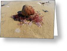 Sea Shell Seaweed An Sand 1 Greeting Card