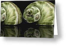 Sea Shells Photography Still Life Greeting Card