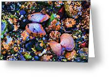 Sea Shells Sea Life Greeting Card