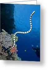 Sea Snake Greeting Card