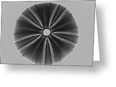 Sea Urchin 1 Greeting Card