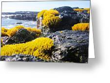Sea Weed Greeting Card