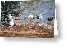 Seafull Community At Palace Of Fine Arts Theatre San Francisco No Two Greeting Card