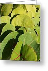 Seagrape Leaf Layer Greeting Card
