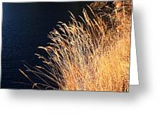 Seagrass In Gold Greeting Card