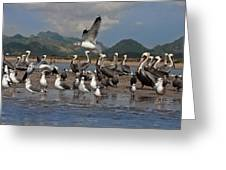 Seagul Fly By Greeting Card