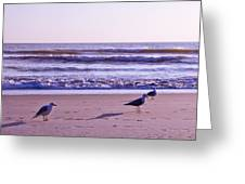 Seagull Alliance Greeting Card
