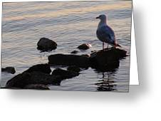 Seagull At Dusk Greeting Card