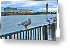 Seagull At Lighthouse Greeting Card