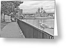 Seagull At The Naval And Military Park Greeting Card