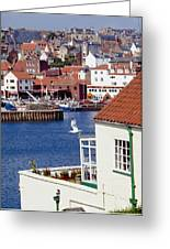 Seagull At Whitby Harbor Greeting Card by Axiom Photographic