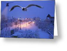 Seagull At Winter Greeting Card