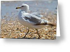 Seagull Greeting Card by Betsy Knapp