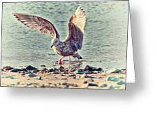 Seagull Flaps Greeting Card