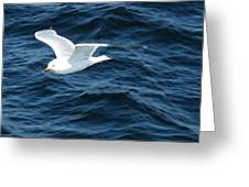 Seagull Flying Over The Waves Wc  Greeting Card