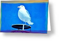 Seagull Fun Colors Greeting Card