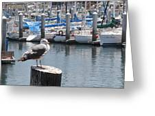 Seagull In Boatwatch Greeting Card