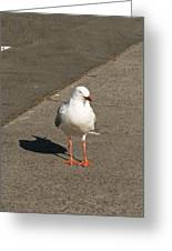 Seagull In The Summer Sun Greeting Card