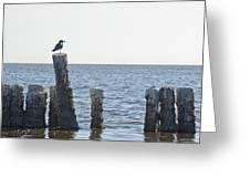 Seagull On A Post Greeting Card