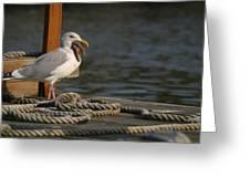 Seagull Swallows Starfish Greeting Card