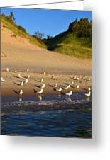 Seagulls At The Bowl Greeting Card