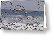 Seagulls Fly Over Surf Greeting Card