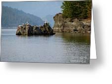 Seagulls On Rock Greeting Card
