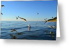 Seagulls Over Lake Michigan Greeting Card