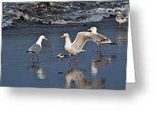 Seagulls Passion Greeting Card