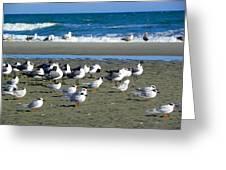 Seagulls Waiting  Greeting Card