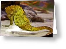 Seahorse Of Course Greeting Card