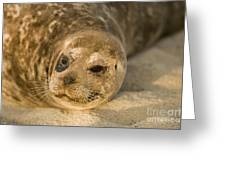Seal 1 Greeting Card