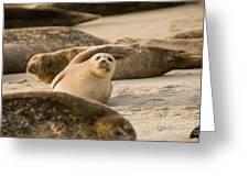 Seal 4 Greeting Card