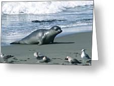 Seal And Seagulls At Piedras Blancas Beach Greeting Card