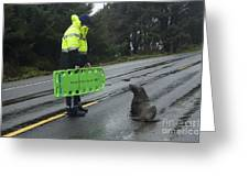 Seal Crossing Greeting Card