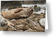 Seal Old Timers Greeting Card