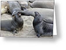 Seal Spa. Men's Talk2 Greeting Card